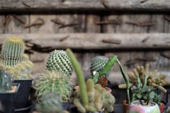 A group of cactus pots Stock Images