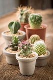 Group of cactus on on the wood background Stock Image