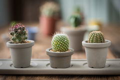 Group of cactus on on the wood background Stock Images