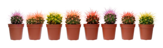 Group of cactuses Royalty Free Stock Photos