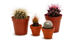 Group of cactuses in pot isolated on white background Stock Photos