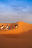 A group of camel trip on the Sahara desert Royalty Free Stock Photos