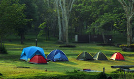 Group camps in the park Royalty Free Stock Image