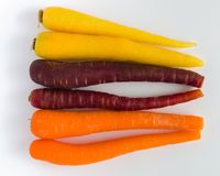 A group of  carrots Stock Photography