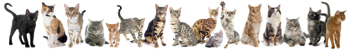 Group of cat Royalty Free Stock Images