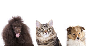 Group of Cat and dog Royalty Free Stock Images
