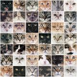 Group of cats Stock Image