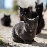 Group of cats Royalty Free Stock Photography