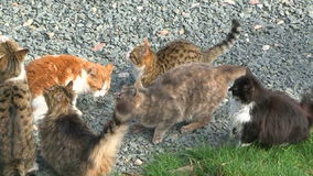 Group Of Cats Asking For Food. In the frame there is a group of six hungry cats of different coloring - striped, tabby, black and white, red and white, spotty stock video