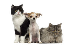 Group of cats and dog sitting and lying Stock Photos