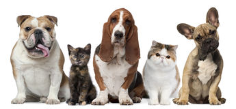 Group of cats and dogs in front of white stock photos