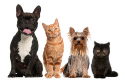 Group of cats and dogs sitting in front of white Royalty Free Stock Images