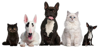 Group of cats and dogs sitting in front of white Stock Images