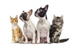 Group of cats and dogs sitting, isolated. On white stock images
