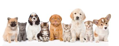Group of cats and dogs sitting in a row. isolated on white. Background royalty free stock photos