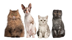 Group of cats sitting in front of white background royalty free stock photos