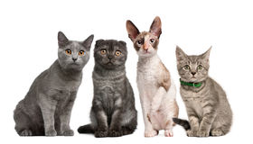 Group of cats sitting in front of white background Stock Images