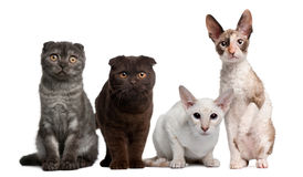 Group of cats sitting in front of white background Stock Photo