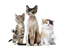 Group of cats sitting, isolated stock photos