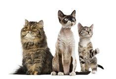 Group of cats sitting, isolated stock images