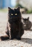 Group of cats Royalty Free Stock Images