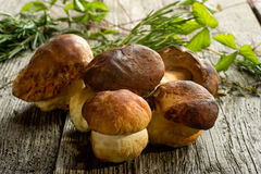Group of cep. Over wood background Royalty Free Stock Images