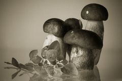 Group of cep porcini boletus with artistic touch in black and white sepia background backdrop cooking concept Royalty Free Stock Photography
