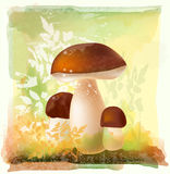 Group of ceps in the forest Royalty Free Stock Photo