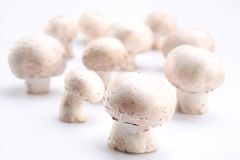 Group of champignons Royalty Free Stock Photography