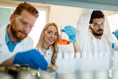 Group of chemistry students working in laboratory. Group of chemistry students working together in laboratory Royalty Free Stock Photo