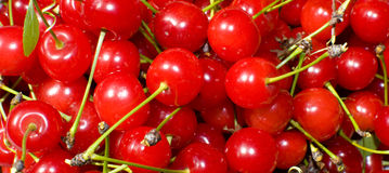 Group of cherries Stock Photography