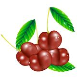 Group of cherry berries Stock Photography