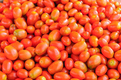 Group of cherry tomatoes. Royalty Free Stock Image