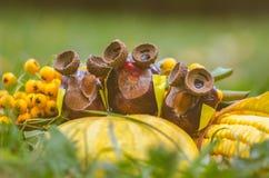Group of chestnut owls. Cute fall chestnut owls figures in orange halloween pumpkin stock photos