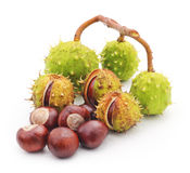 Group chestnuts. Royalty Free Stock Photos