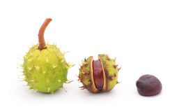 Group chestnuts. Royalty Free Stock Photo