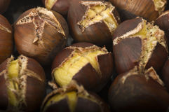 Group of chestnuts Royalty Free Stock Photo