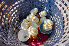 Group Chick In basket Royalty Free Stock Photo