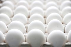 Group of chicken raw eggs Royalty Free Stock Image