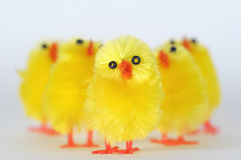 Group of Chicks. Artificial chicks stock images