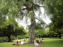 Group of children (7-9) playing ring-a-ring-o'roses in park, falling down beside tree Stock Photography