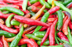 Group of Chilli Stock Image