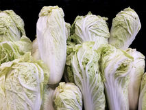 The group of Chinese cabbages Background. Royalty Free Stock Photography