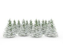 Group of christmas pine trees covered in snow isolated on white. Background Stock Photography