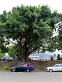 Group of churchgoers under big tree at outdoor service,Nadi,Fiji,2015. Moving image of native families seated under the shade of huge tree and standing at the royalty free stock photo