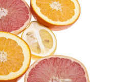 Group of Citrus Royalty Free Stock Photo