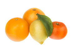 Group of citrus fruit mandarin orange and lemon. Royalty Free Stock Images
