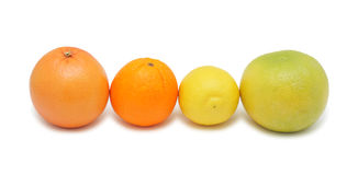 Group of citrus fruits, isolated Stock Image