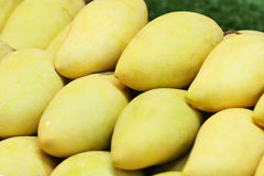 Group of close-up yellow ripen fresh sweet mangoes from fruit orchard, famous asia summer souvenir royalty free stock images