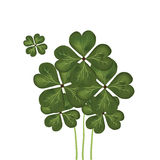 Group of clovers Stock Photos